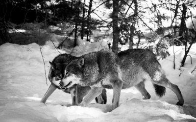 Hunting Season – Part 3